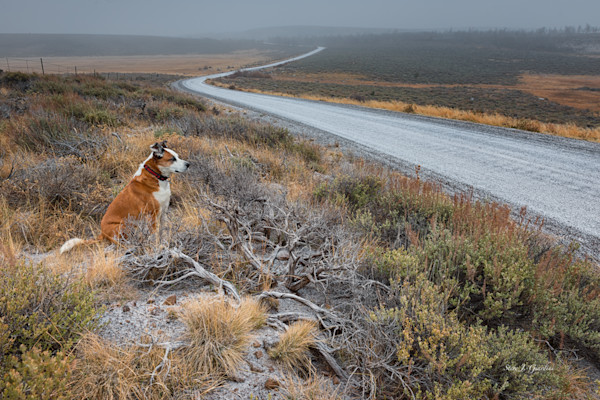 Steens Mountain Watchdog (151356ANND8-S) Photograph for Sale as Fine Art