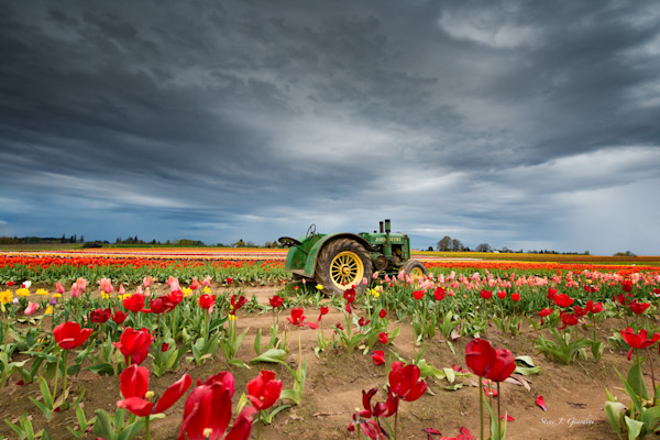 John Deere Tulip (161407LND8-P) Photograph for Sale as Fine Art