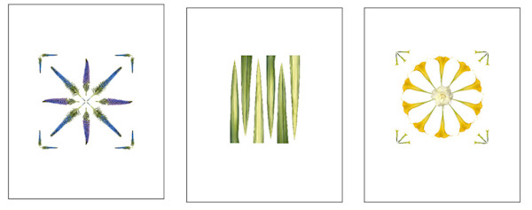 Group of three pretty botanical prints showing Pride of Madeira, Flax and Angel's Trumpet.
