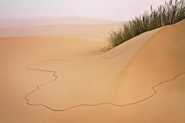 Softly toned scene of a sand dune on the Oregon coast has an interesting composition as cracks crawl through the sand.
