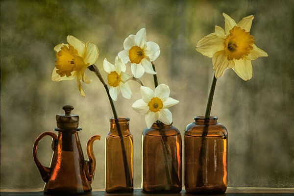 Five daffodils comprise a still life in this photograph by David Lorenz Winston. Lit from behind, they share a bit of nature for your wall.