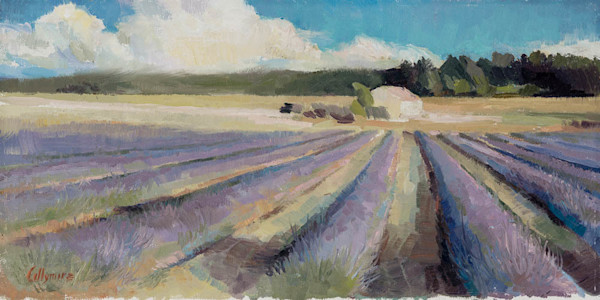 Lavender Fields, Haute Provence