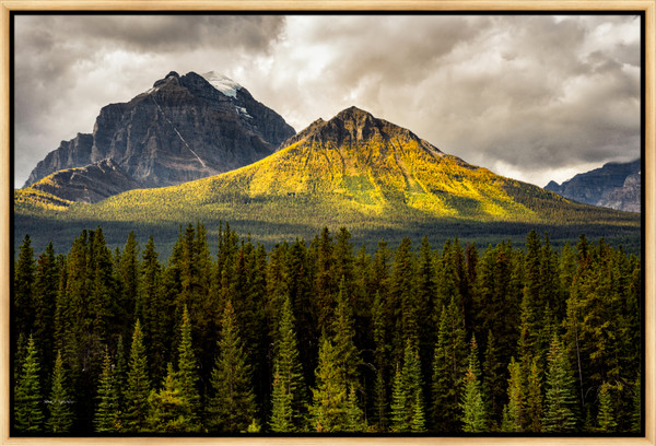 Road to Jasper (131262LND8) Photograph for Sale as Framed Metal Print