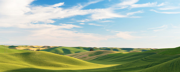 Rolling Hills Under A Blue Sky, Palouse, Washington