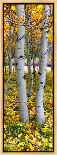 Yosemite East (151336NWND8) Aspen Trees by Steve J. Giardini