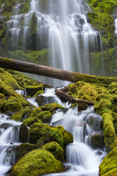 Proxy Falls II (141084LNND8) Photograph for Sale as Fine Art Print