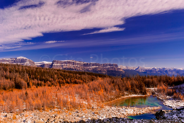 Larch Trees in the Canadian Rockies