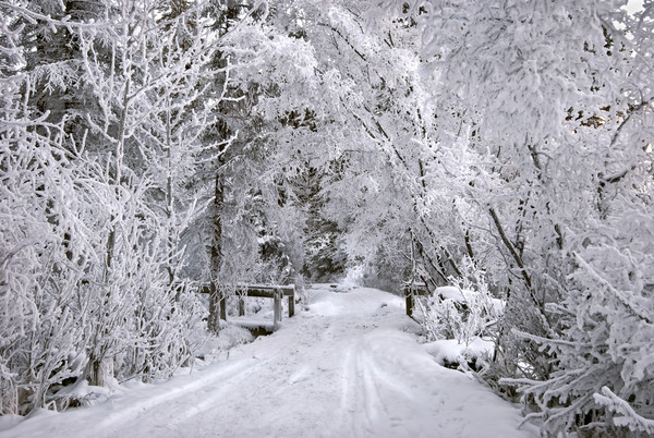 Frosty Walk in a Winter Wonderland.