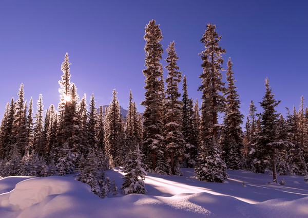 Winter scene of snow and blue sky. Banff National Park| Gita Photos | Canadian Rockies |