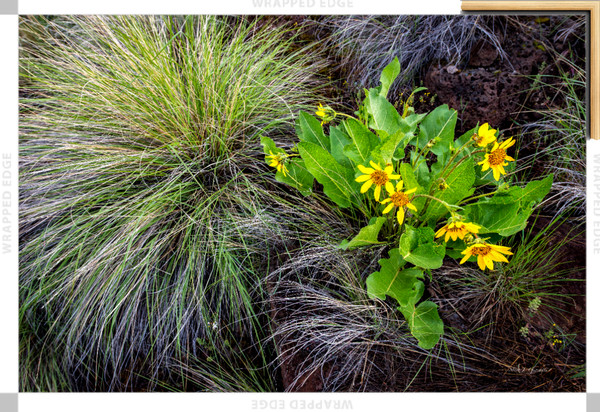 Wild Yellow (141226NWND8-S) Photograph for Sale as Framed Canvas Fine Art Print