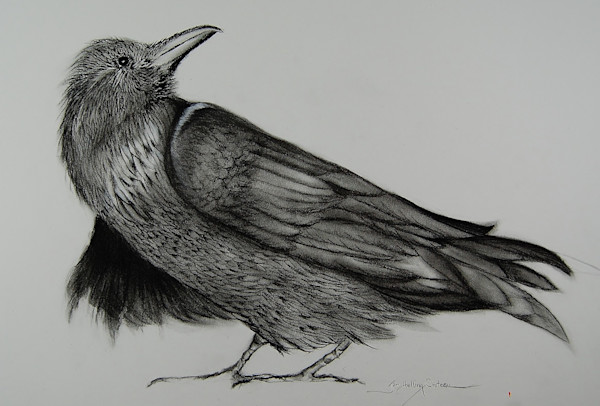 Dynamic fine art charcoal painting of crow looking back.