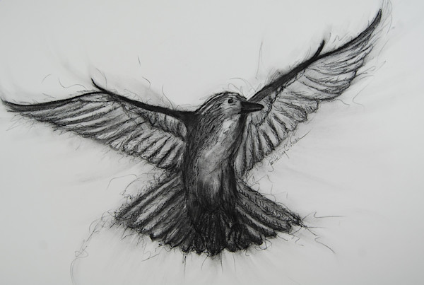 Beautiful fine art charcoal painting of a raven coming in for a landing.