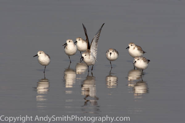 Fine Art Photographs of Shorebirds