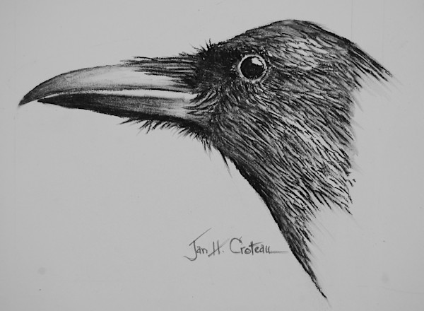 Stunning portrait of a Corvid, fine art charcoal painting ready to frame.