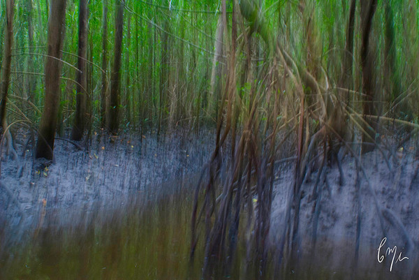 Everglades Backcountry Photography | Constance Mier Photography