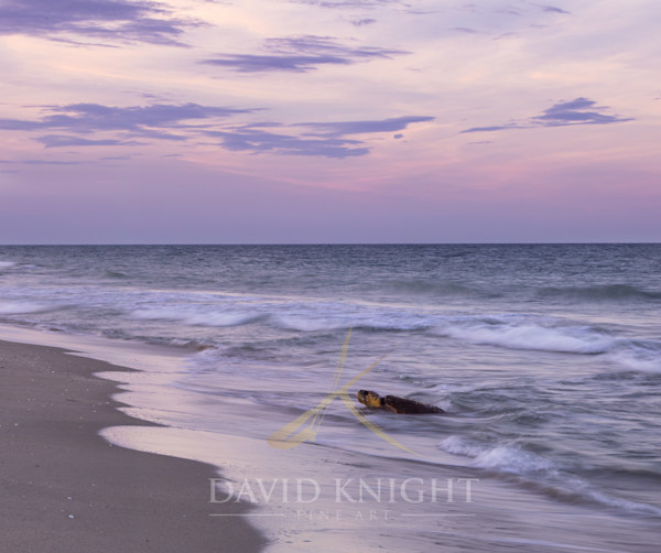 Florida Wildlife Photography for sale by David Knight