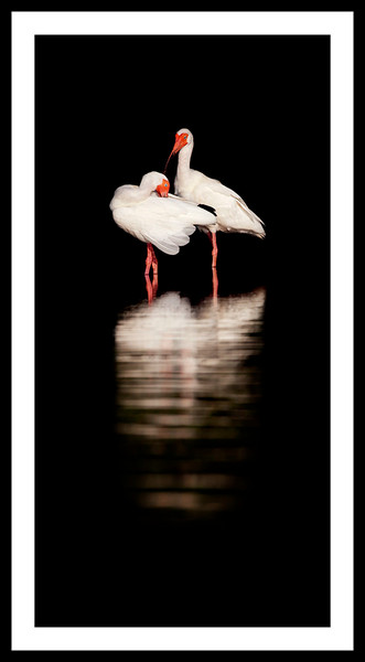 Constance Mier Photography - Framed Prints