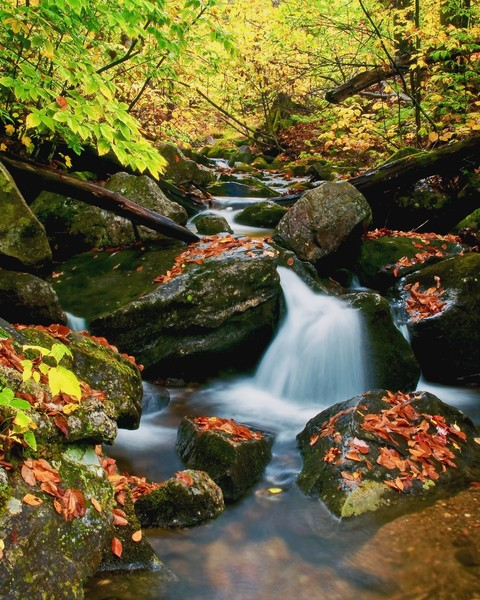 Autumn Fall Wall Art. Vermont Photographs.