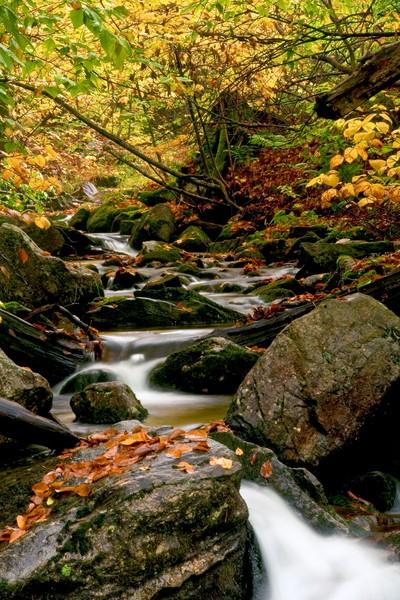 Vermont Stream Fall Wall Art Photographs.