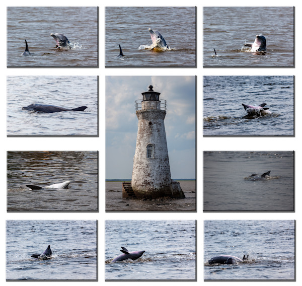 Dolphins around Cockspur Lighthouse