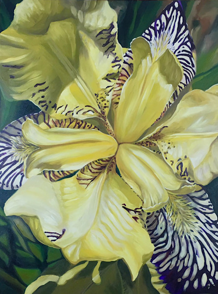 This purple and white striped iris bloom is bursting with energy and movement in this painting by Sara Bardin.
