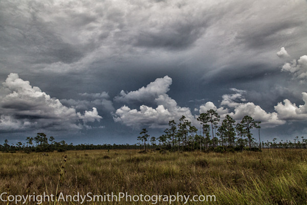 Stormy Day in the Everglades fine art photograph