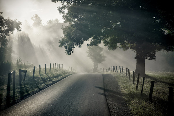 A lonely road, bordered by barbed wire fence and large trees, leads the viewer into the morning mist in this Open Edition print by photographer Todd McPhetridge.