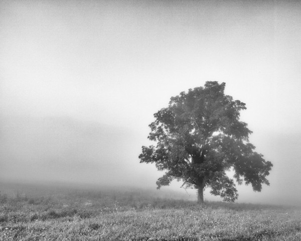 A single, solitary tree appears out of the fog in this black & white Open Edition print by photographer Todd McPhetridge.