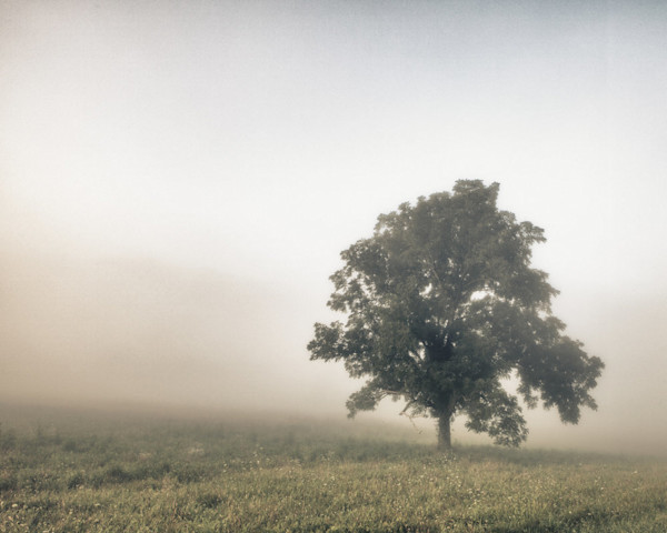 A solitary tree is surrounded by a color infused fog in this Open Edition print by photographer Todd McPhetridge.