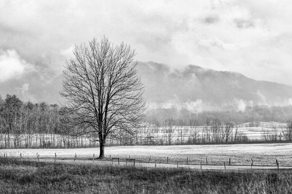 Mist lays across the fields and partly obscures the hills in the distance as a lone tree stands guard by the roadside in this Open Edition print by photographer Todd McPhetridge.