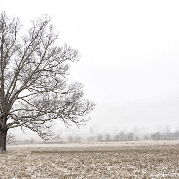 A pale brown field, covered with a dusting of snow, stretches out before a lone tree in this Open Edition print by photographer Todd McPhetridge.