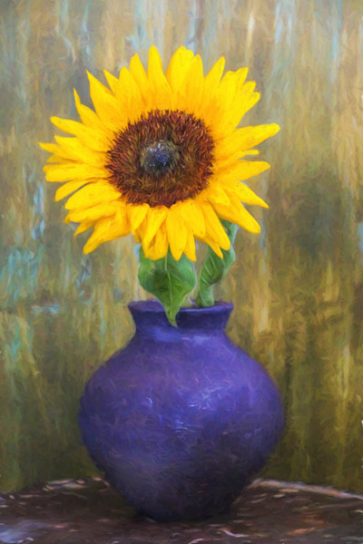 A bright golden sunflower blossom sits in a blue vase in this Open Edition print by photographer Todd McPhetridge.