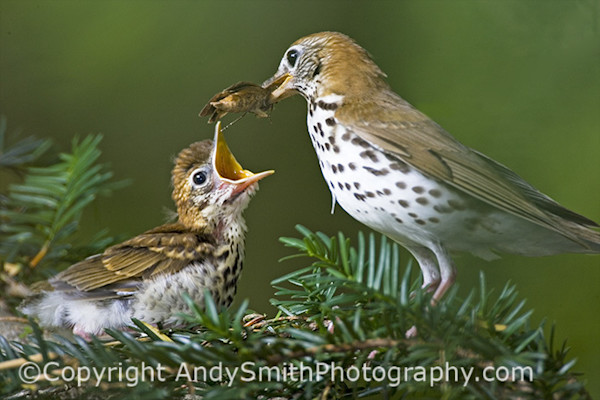 Fine Art photograph of Feeding the Fledgling
