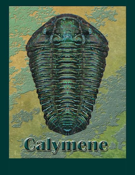 Calymene Niagarensis Fossil Trilobite
