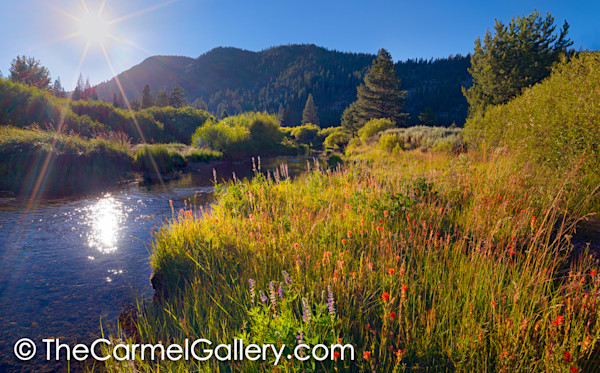 Evening Sun, High Sierra