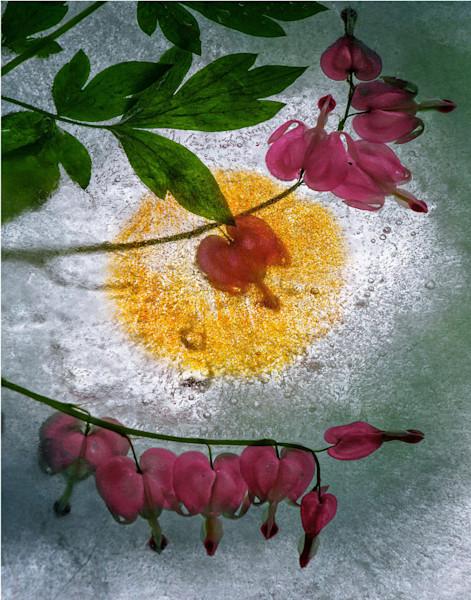 Bleeding Heart Flower Art