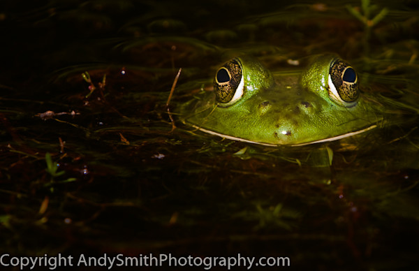 Fine Art Photographs of Frogs