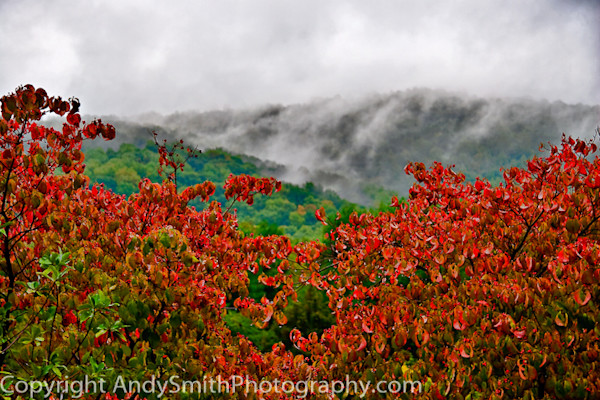 Dogwood on a Stormy Morning fine art photograph