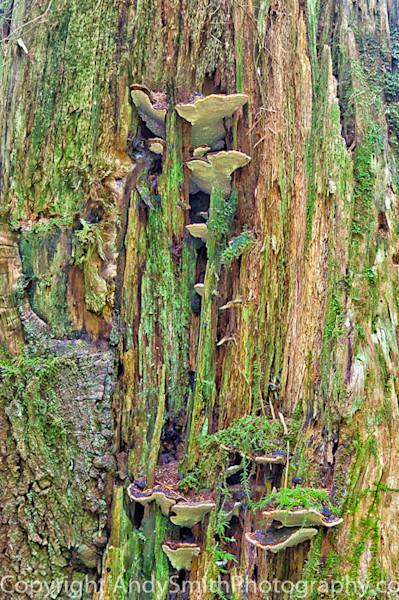 fine art photograph of Moss and Mushrooms
