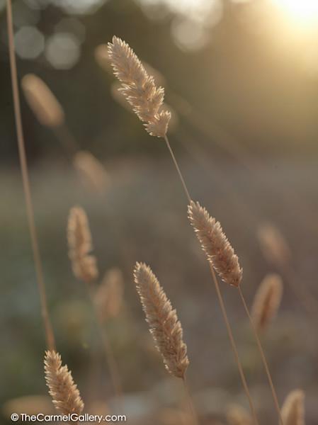 Summer Meadow VII