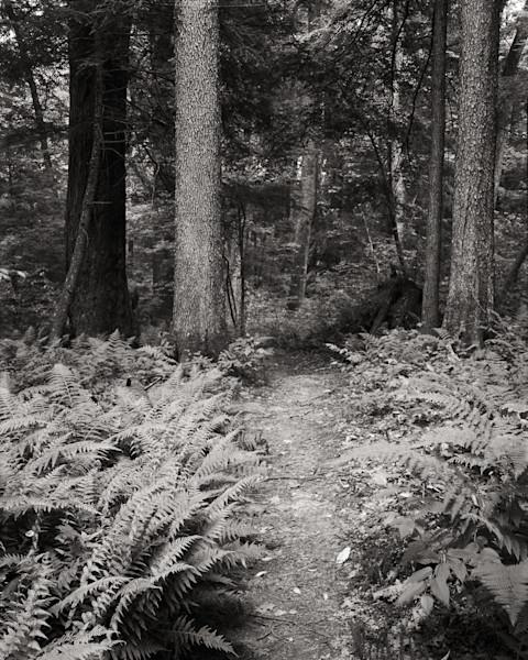 Hemlock Forest