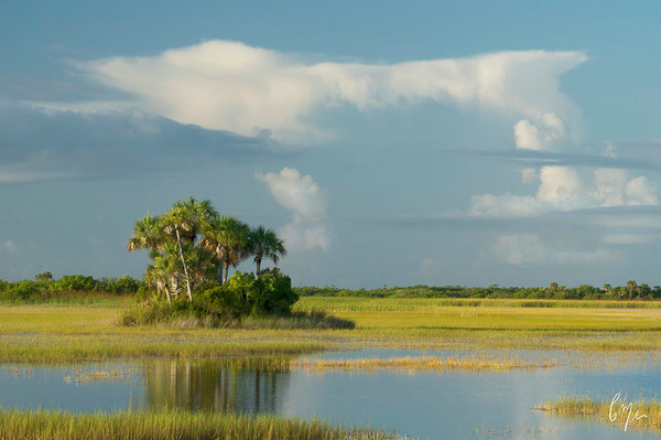 Everglades Prairie Photography | Constance Mier Photography
