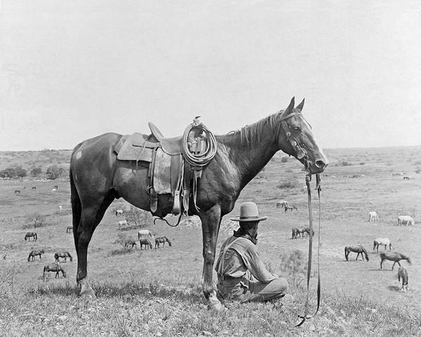 The Horse Wrangler