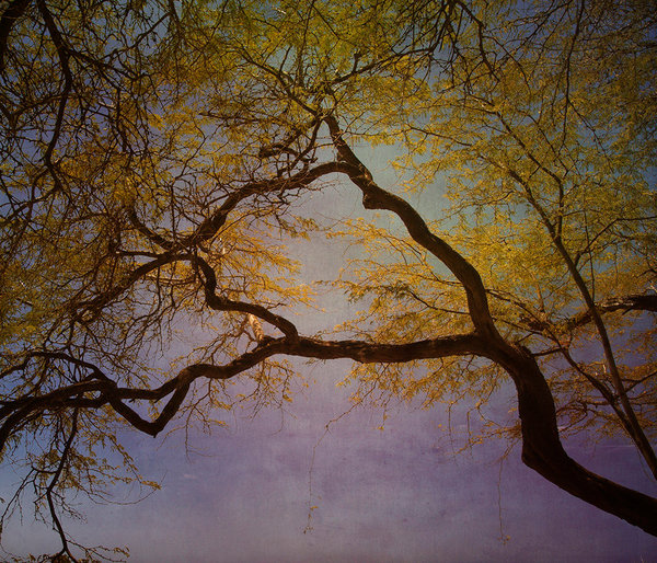 A gorgeous image of a large branching tree set against a metallic blue sky captures the natural beauty of the tree's lines and form, imperfect but full of grace and strength in this print from a photograph by Ryn Clarke.