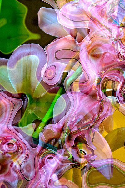 This stunning visual by photographer Ryn Clarke is beautifully composed of abstract digital images of orchids and leaves, all flowing and swirling together to create an almost kaleidoscope effect.
