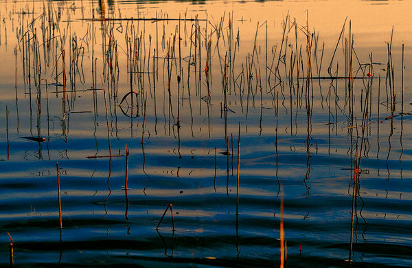 Gorgeous deep blues and shimmering golden oranges suffuse the image, and defiant, sunlit reeds add depth and quiet energy to this peaceful scene in this print from a photograph by Ryn Clarke.