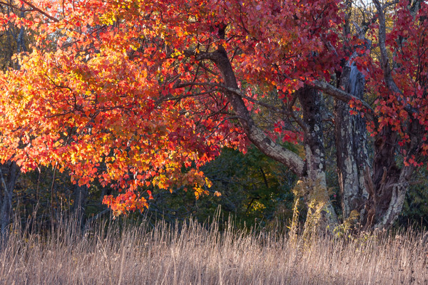 Forest Wall Art: Fine Art Photographs by Dan Greenberg