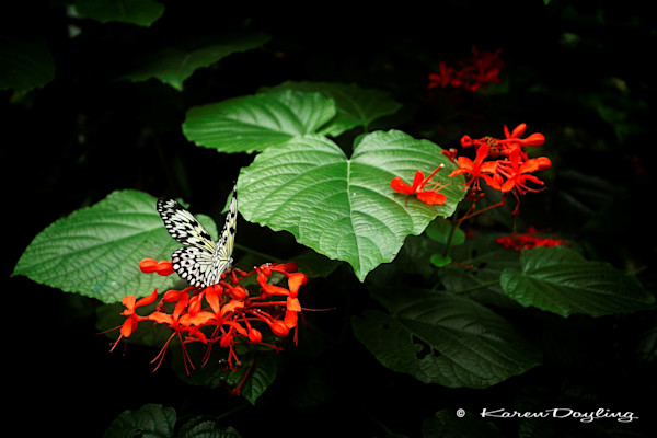 Garden With Wings - Rice Paper Butterfly