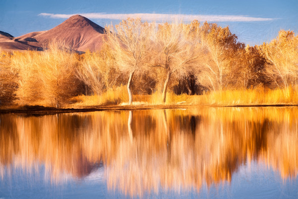 Fall's Reflection AE - Bosque del Apache Wildlife Refuge, Socorro, New Mexico 2009