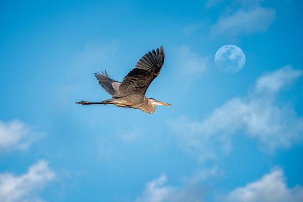 Fly to the Moon 1 - Eau Gallie, Florida 2015